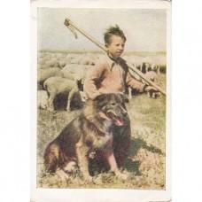 Еллинская В. 1955. Помощники чабана