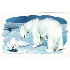 Алексеев М., Строганова Н. 1972. Белый медведь