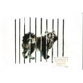 Чарушин Е. 1989. Эскимосская собака