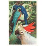 Аристов Л. 1968. Попугай