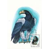 Козлов И. 1982. Белоплечий орлан. Картмаксимум.